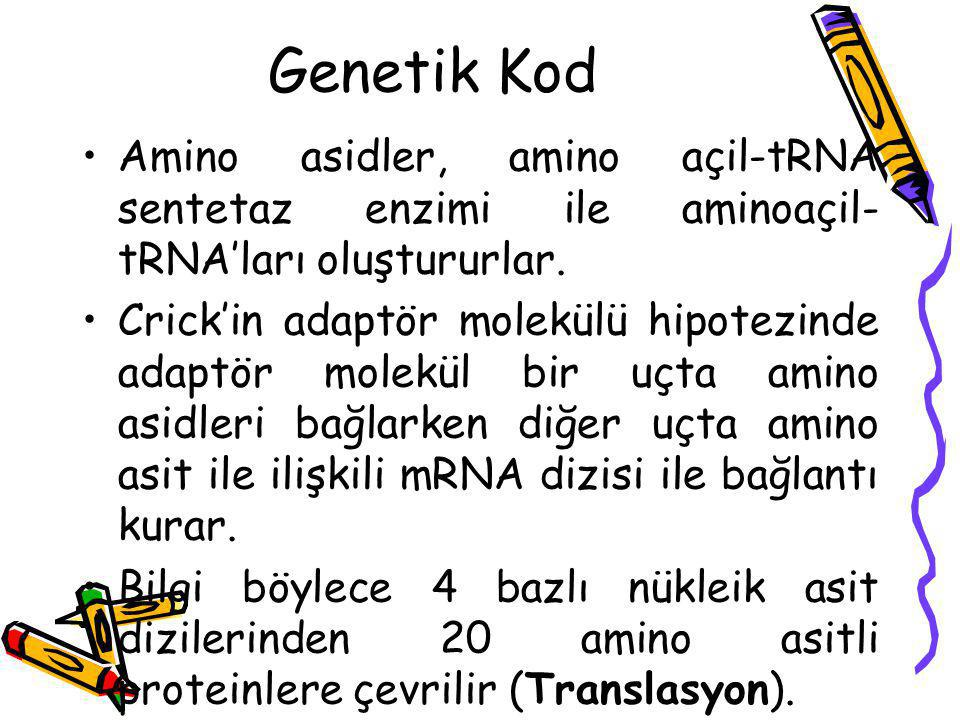 Genetik Kod Amino asidler, amino açil-tRNA sentetaz enzimi ile aminoaçil-tRNA'ları oluştururlar.