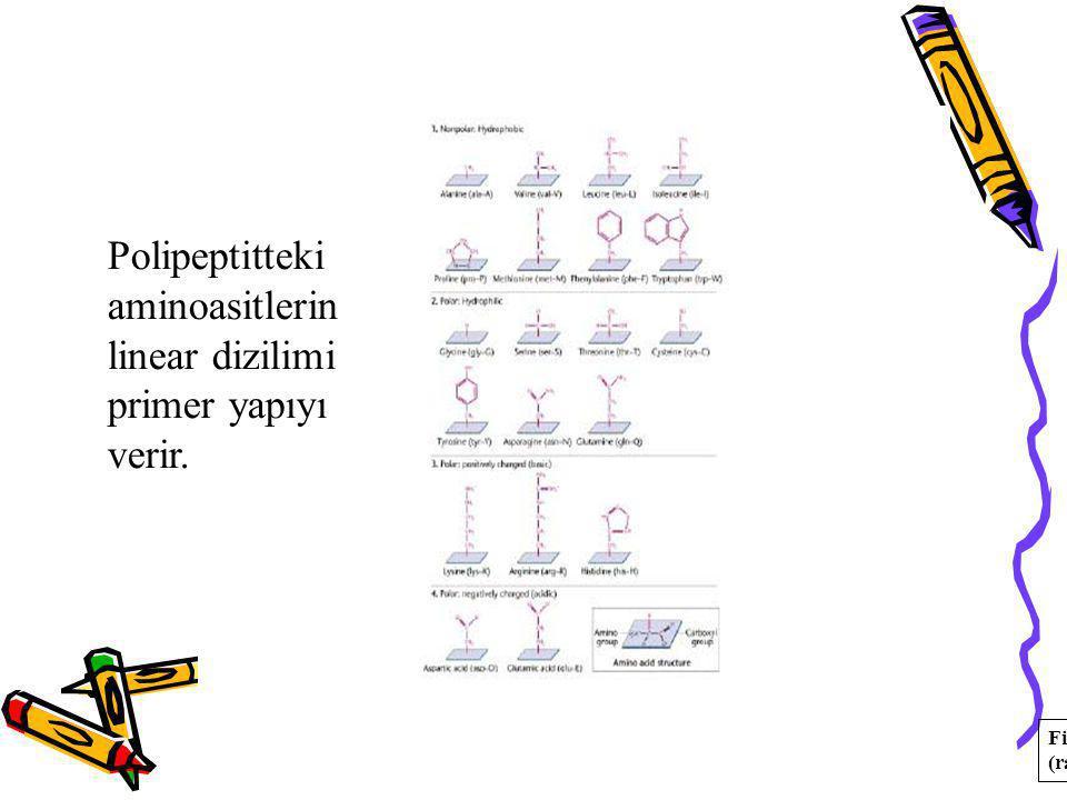 Polipeptitteki aminoasitlerin linear dizilimi primer yapıyı verir.
