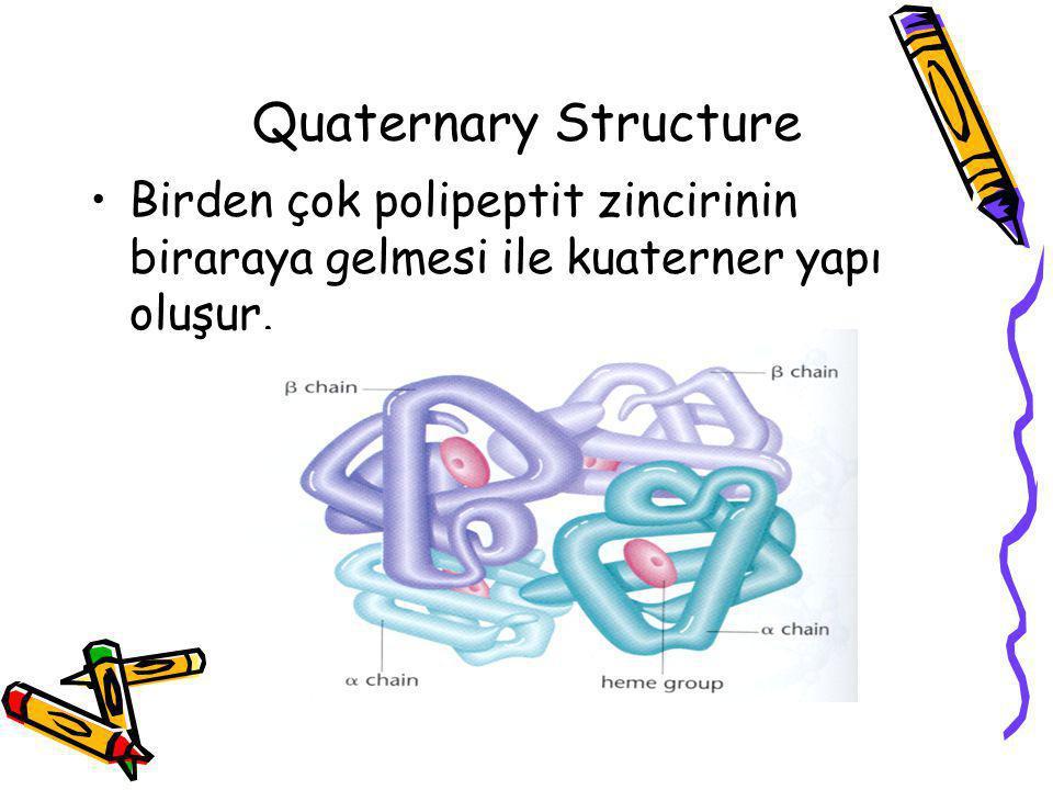 Quaternary Structure Birden çok polipeptit zincirinin biraraya gelmesi ile kuaterner yapı oluşur.