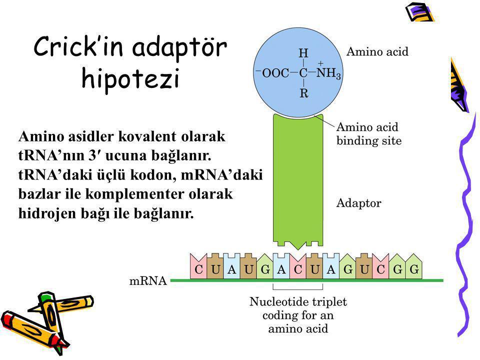 Crick'in adaptör hipotezi