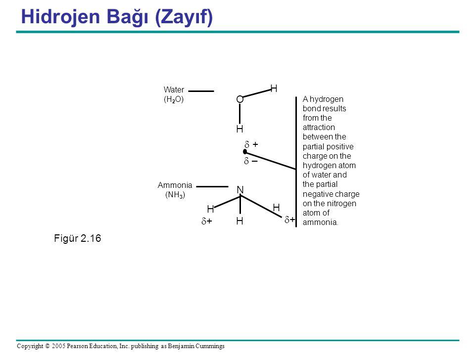 Hidrojen Bağı (Zayıf) H O  +  – N d+ + Figür 2.16 Water (H2O)