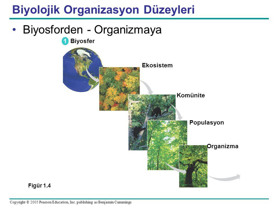 Biyolojik Organizasyon Düzeyleri