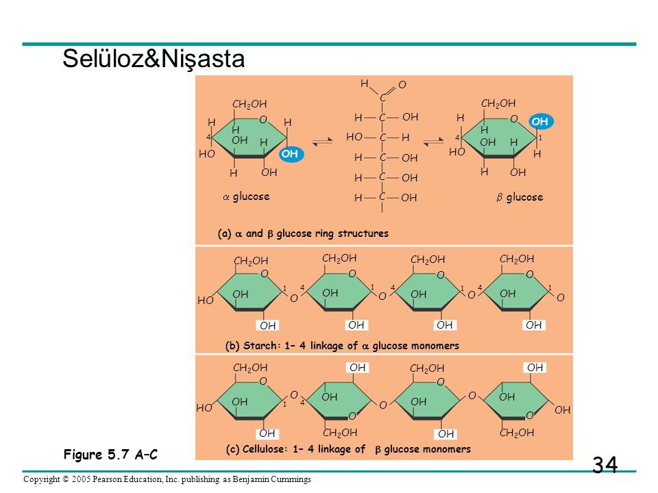 Selüloz&Nişasta Figure 5.7 A–C  glucose  glucose H O C CH2OH OH HO