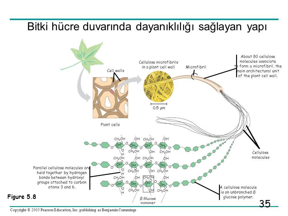 Bitki hücre duvarında dayanıklılığı sağlayan yapı