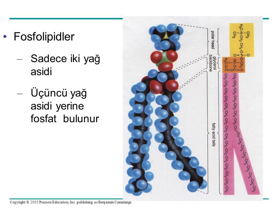Fosfolipidler Sadece iki yağ asidi
