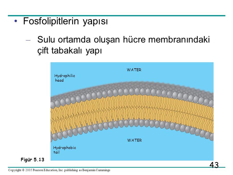 Fosfolipitlerin yapısı