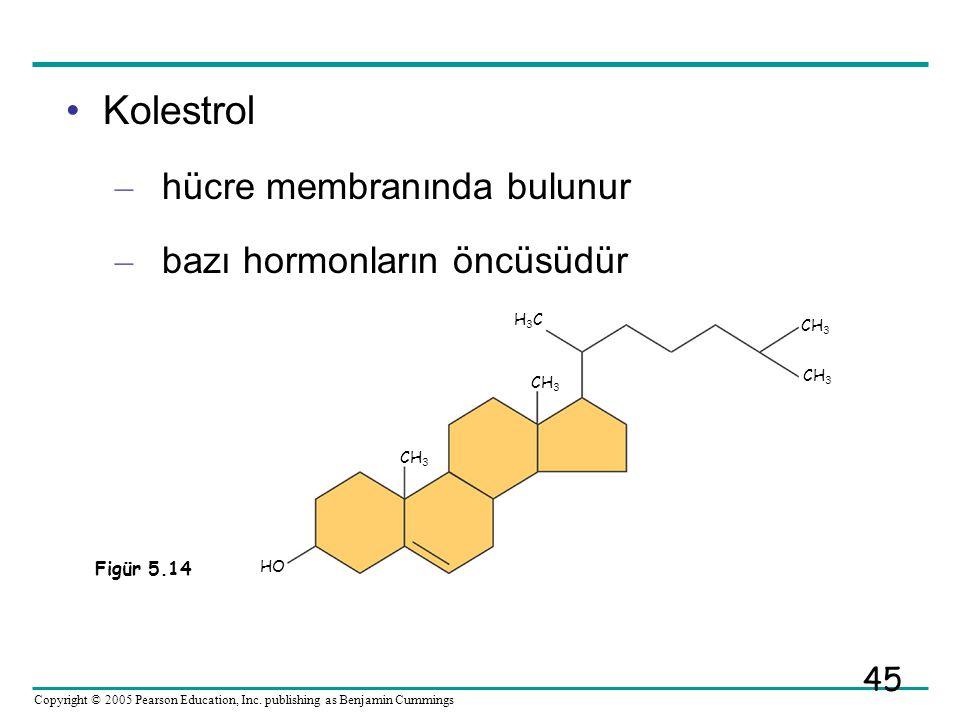 Kolestrol hücre membranında bulunur bazı hormonların öncüsüdür