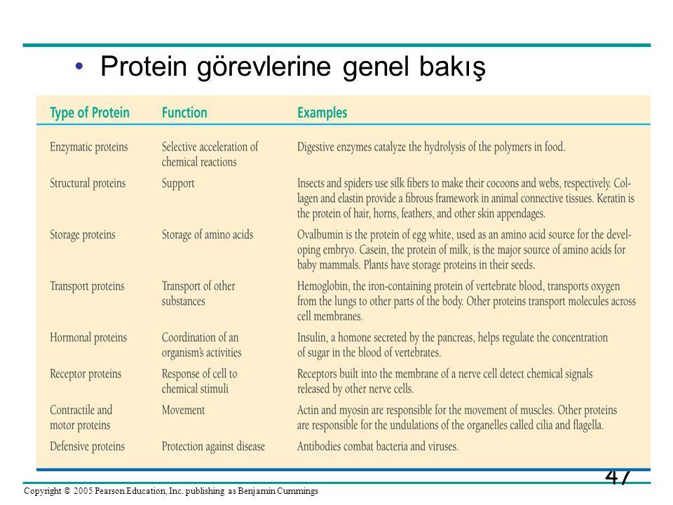 Protein görevlerine genel bakış