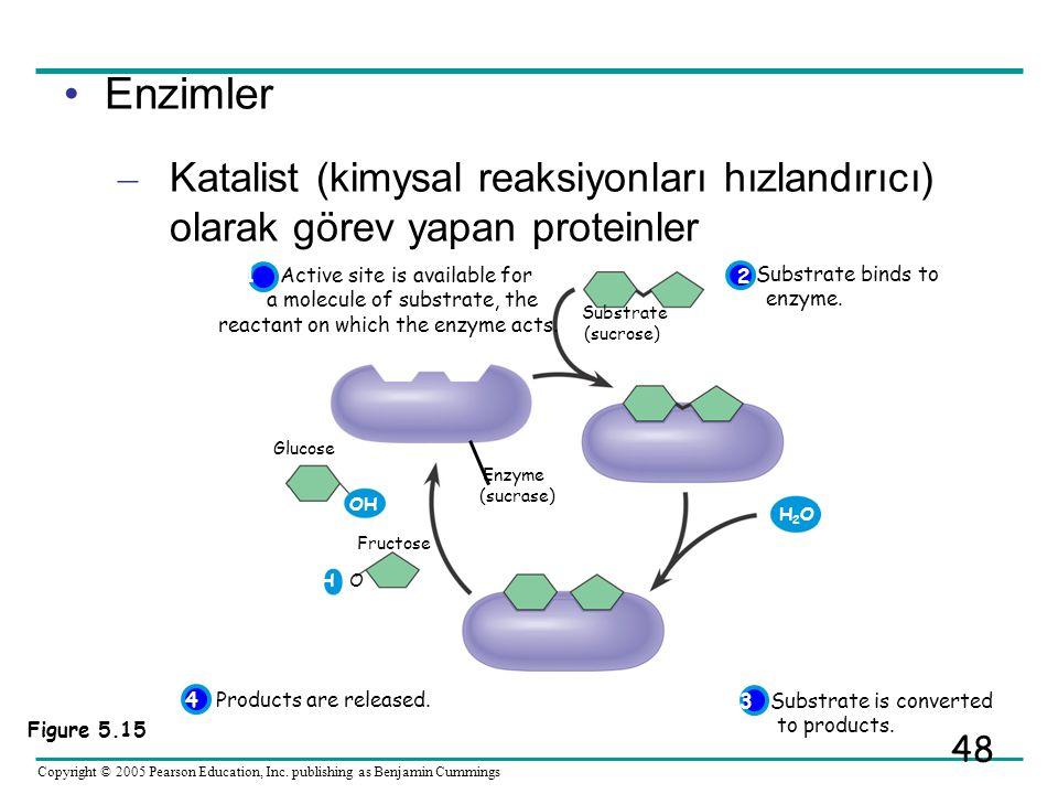 Enzimler Katalist (kimysal reaksiyonları hızlandırıcı) olarak görev yapan proteinler. Substrate. (sucrose)