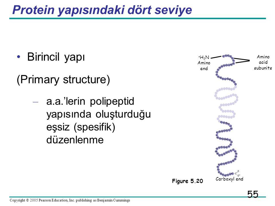 Protein yapısındaki dört seviye