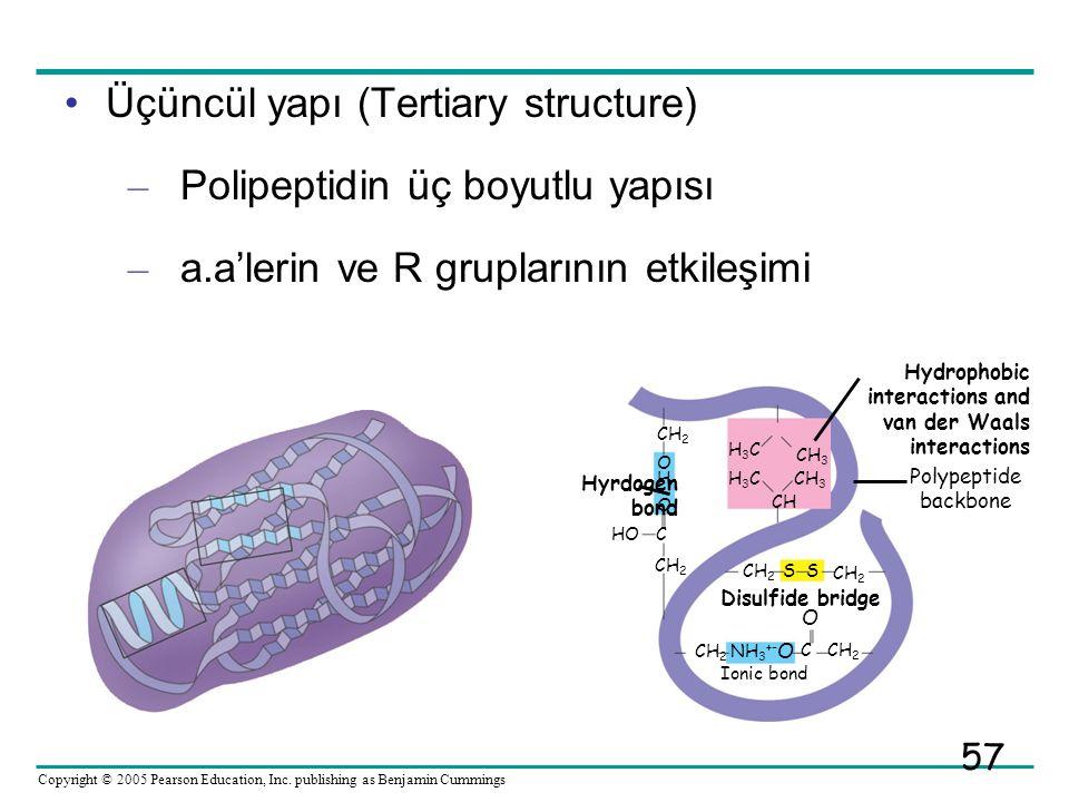Üçüncül yapı (Tertiary structure) Polipeptidin üç boyutlu yapısı