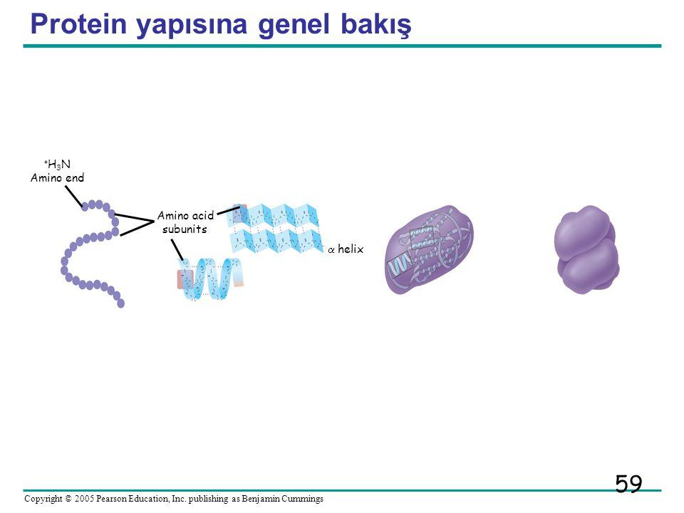 Protein yapısına genel bakış