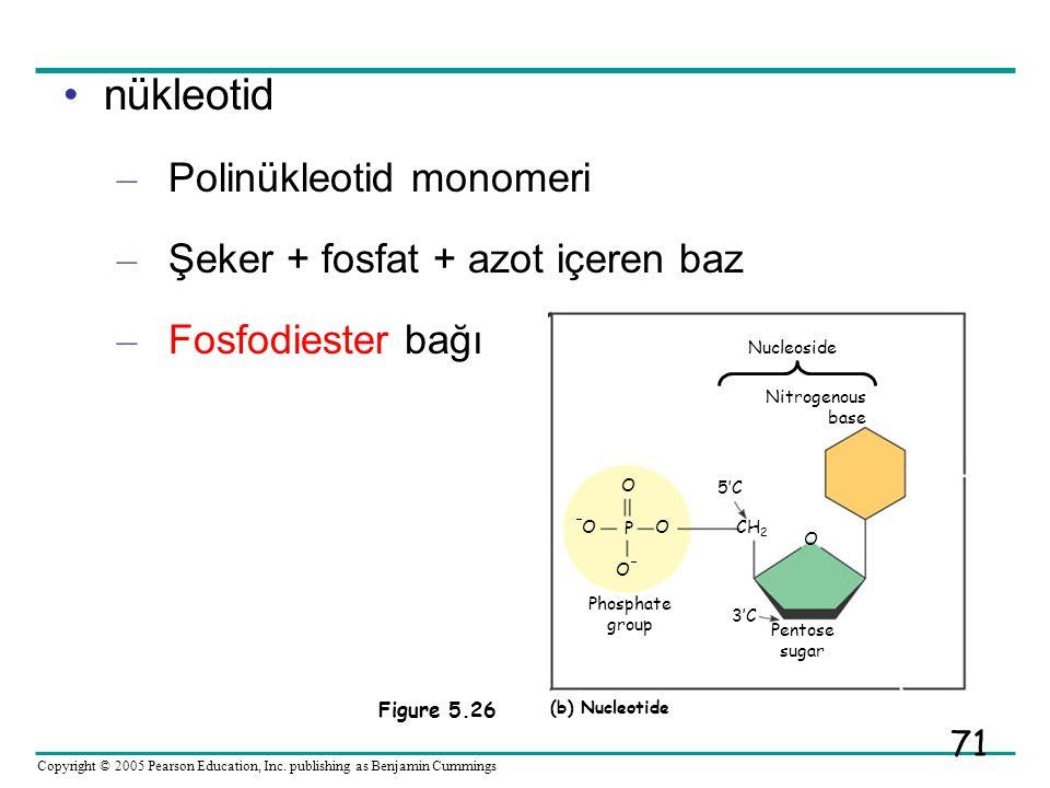nükleotid Polinükleotid monomeri Şeker + fosfat + azot içeren baz