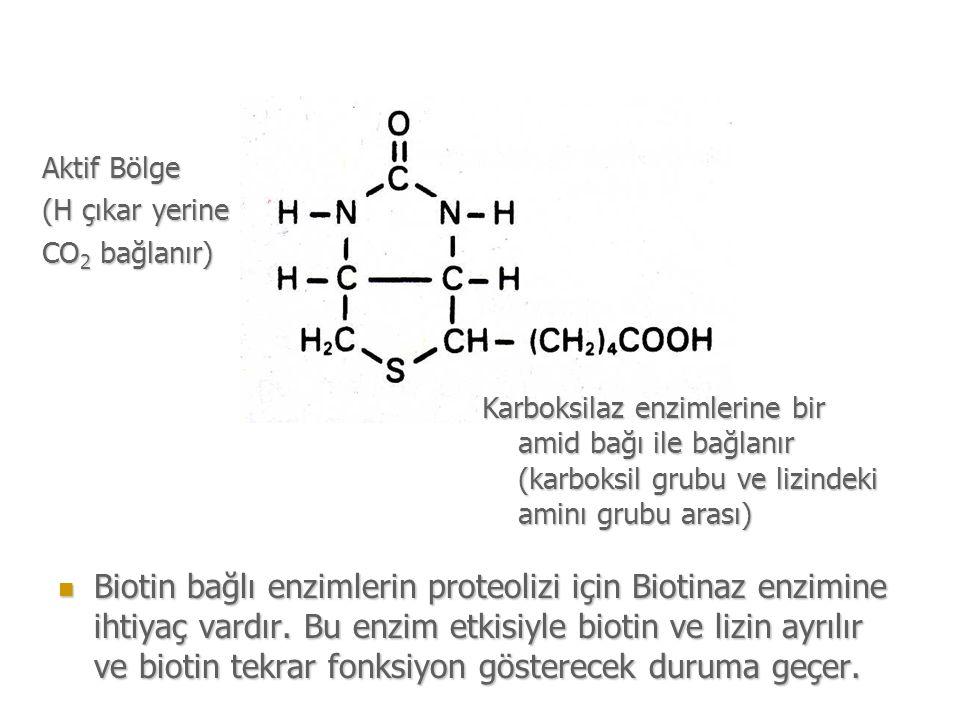 Aktif Bölge (H çıkar yerine. CO2 bağlanır) Karboksilaz enzimlerine bir amid bağı ile bağlanır (karboksil grubu ve lizindeki aminı grubu arası)