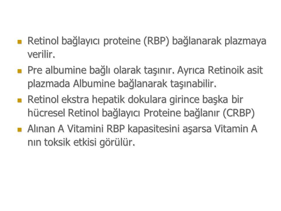 Retinol bağlayıcı proteine (RBP) bağlanarak plazmaya verilir.