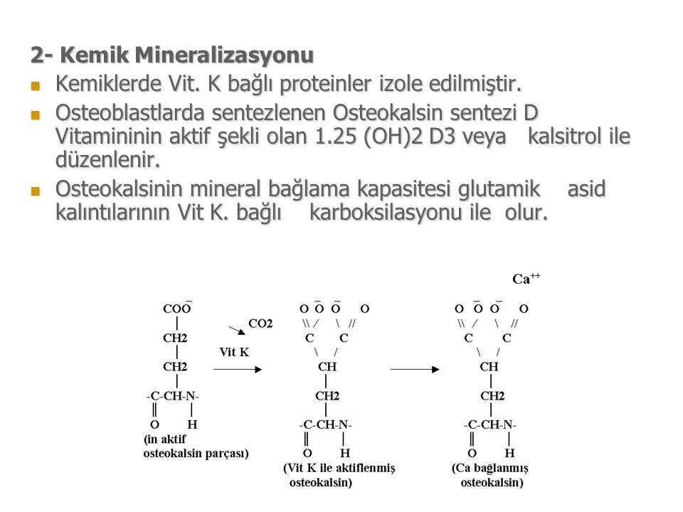 2- Kemik Mineralizasyonu