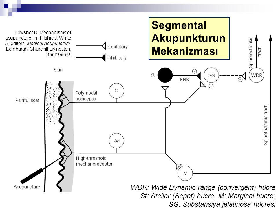 Segmental Akupunkturun Mekanizması