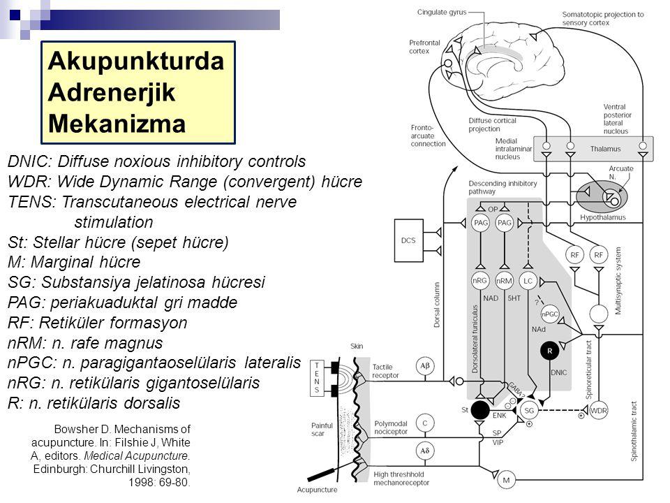 Akupunkturda Adrenerjik Mekanizma