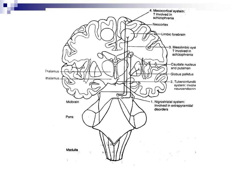 Dopaminerjik sistem