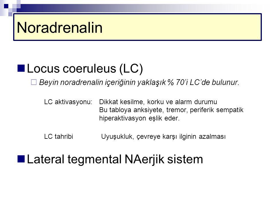 Noradrenalin Locus coeruleus (LC) Lateral tegmental NAerjik sistem