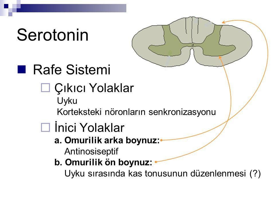 Serotonin Rafe Sistemi