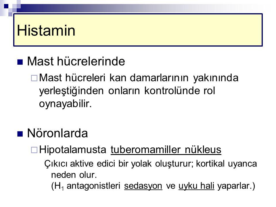 Histamin Mast hücrelerinde Nöronlarda