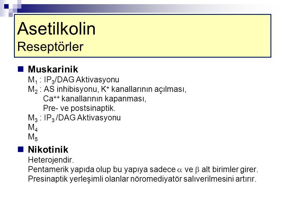 Asetilkolin Reseptörler