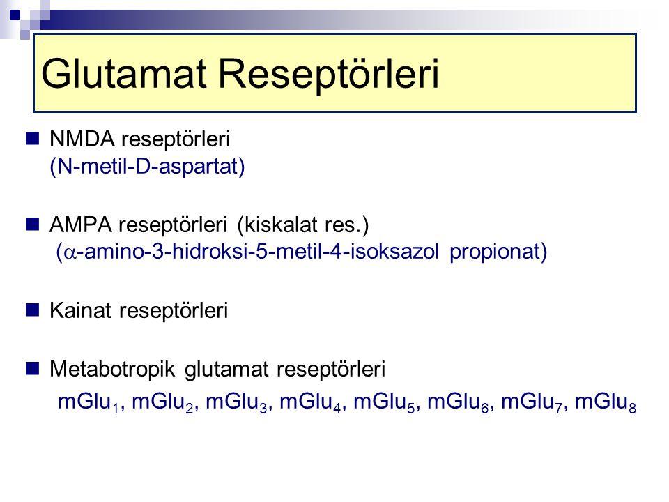 Glutamat Reseptörleri