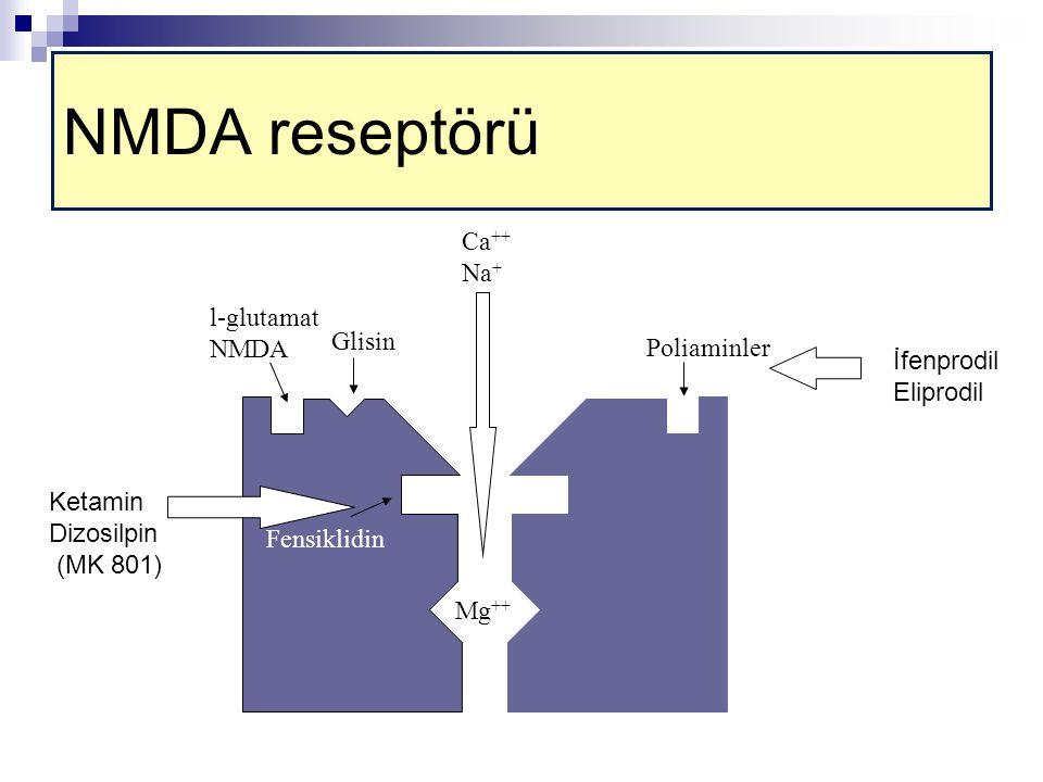 NMDA reseptörü Ca++ Na+ l-glutamat NMDA Glisin Poliaminler İfenprodil