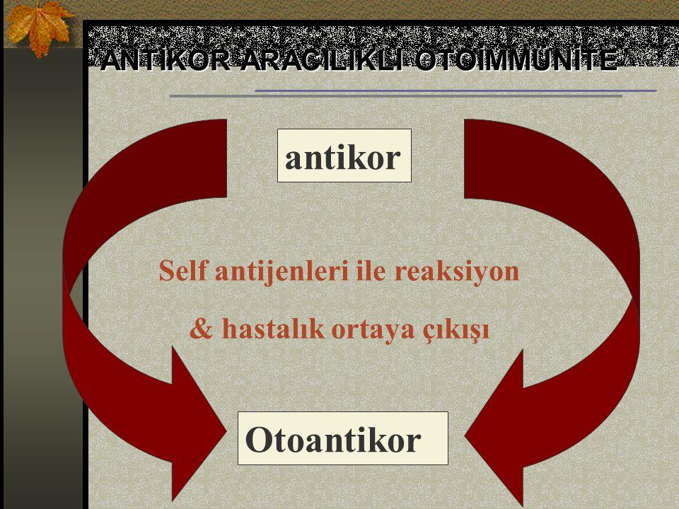 Self antijenleri ile reaksiyon & hastalık ortaya çıkışı
