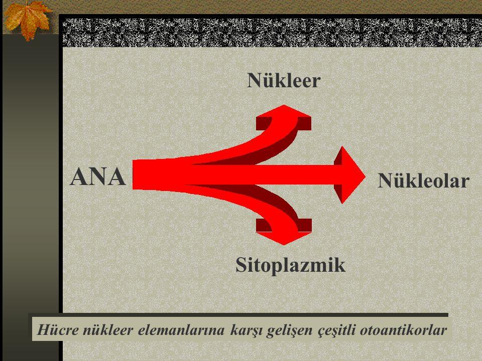 ANA Nükleer Nükleolar Sitoplazmik