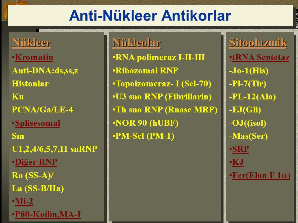 Anti-Nükleer Antikorlar