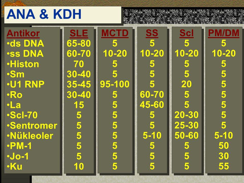 ANA & KDH Antikor ds DNA ss DNA Histon Sm U1 RNP Ro La Scl-70