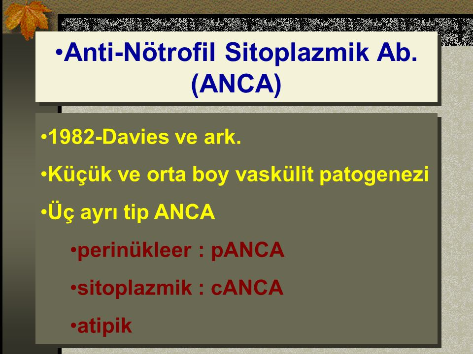 Anti-Nötrofil Sitoplazmik Ab. (ANCA)