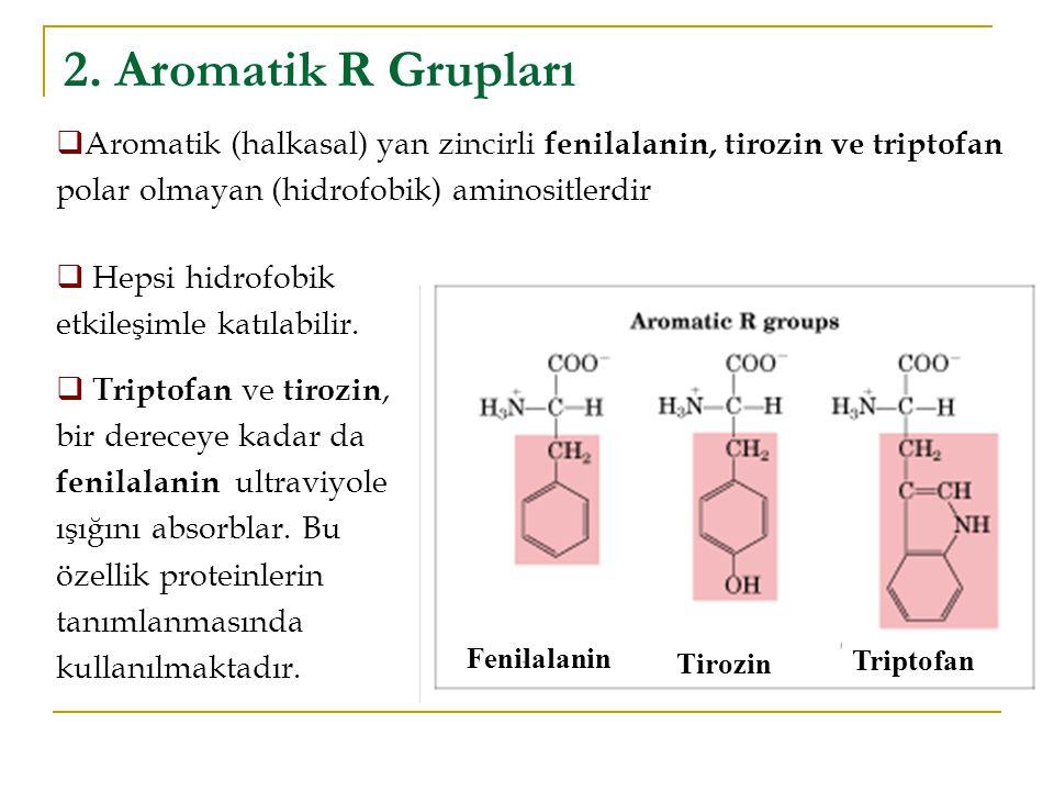 2. Aromatik R Grupları Aromatik (halkasal) yan zincirli fenilalanin, tirozin ve triptofan polar olmayan (hidrofobik) aminositlerdir.