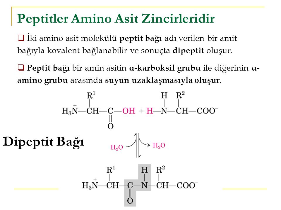 Peptitler Amino Asit Zincirleridir