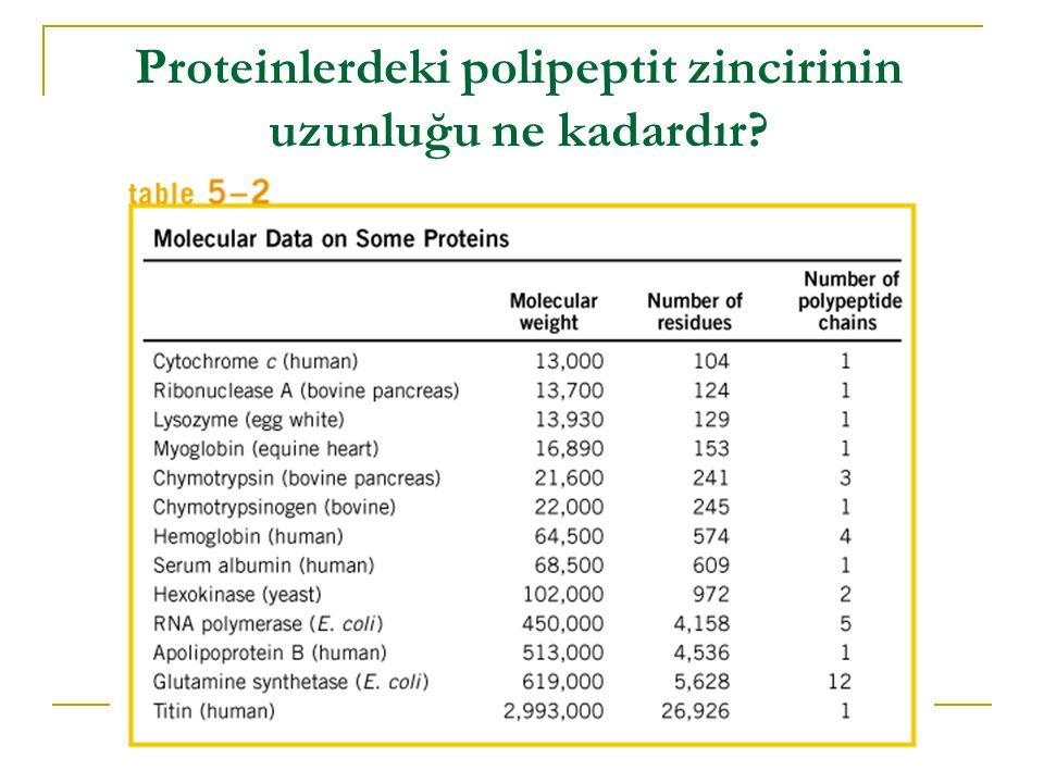 Proteinlerdeki polipeptit zincirinin uzunluğu ne kadardır