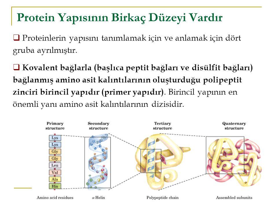 Protein Yapısının Birkaç Düzeyi Vardır