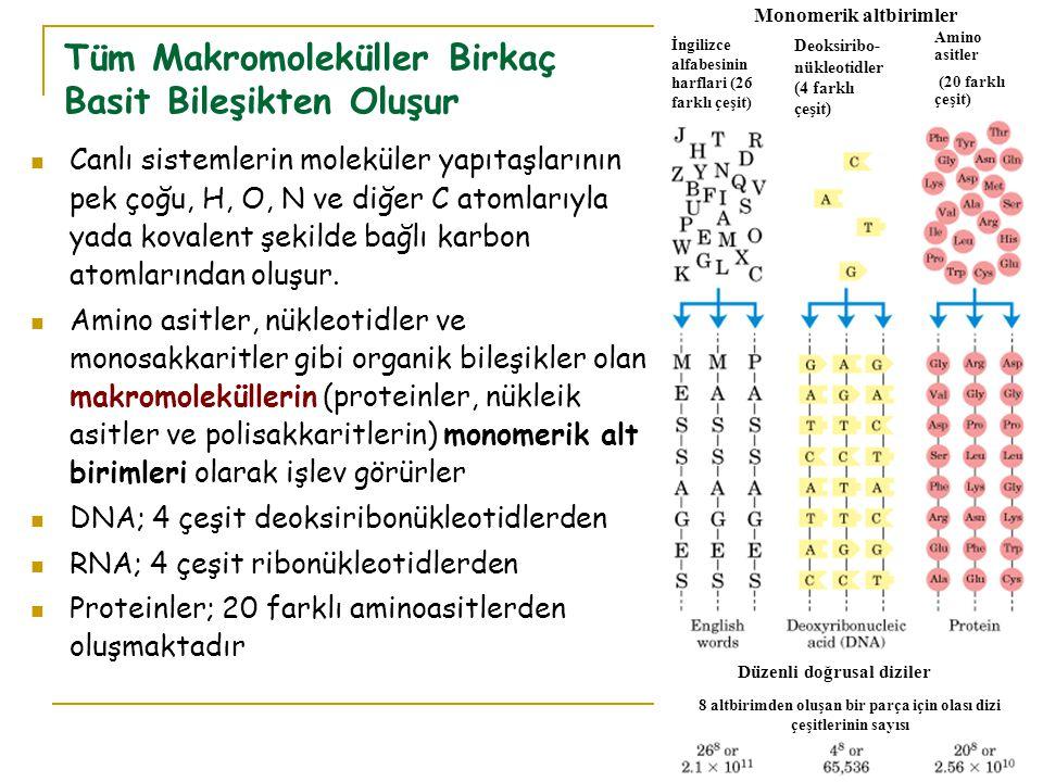 Tüm Makromoleküller Birkaç Basit Bileşikten Oluşur