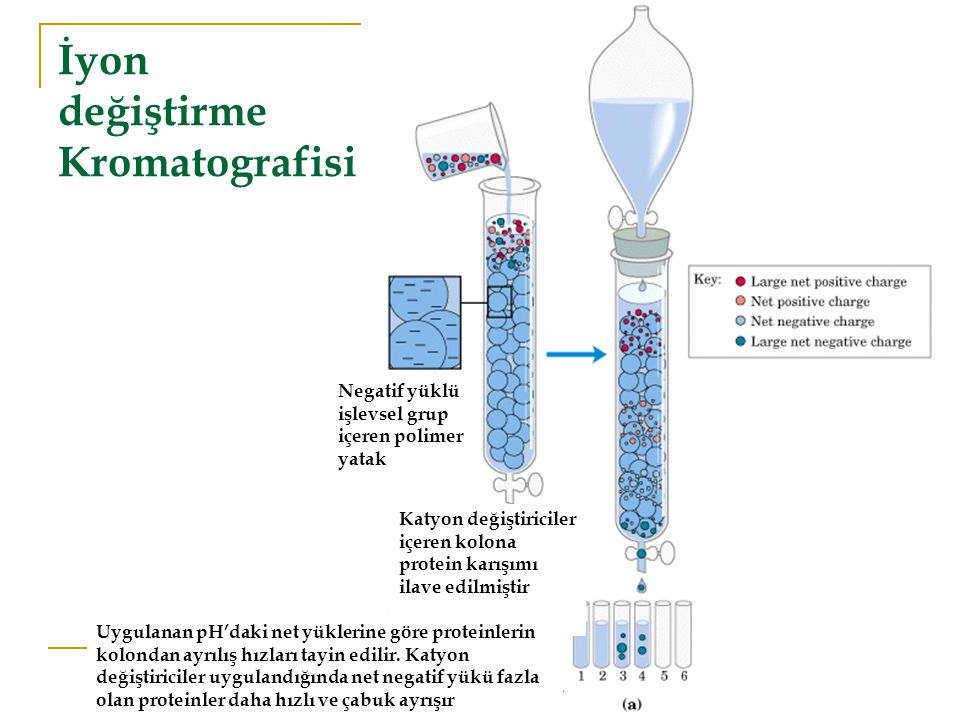 İyon değiştirme Kromatografisi