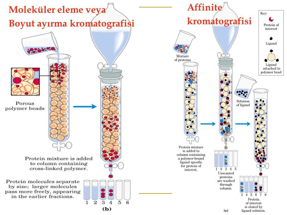 Affinite kromatografisi Moleküler eleme veya Boyut ayırma kromatografisi
