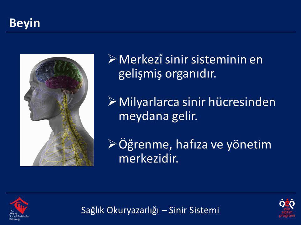 Merkezî sinir sisteminin en gelişmiş organıdır.
