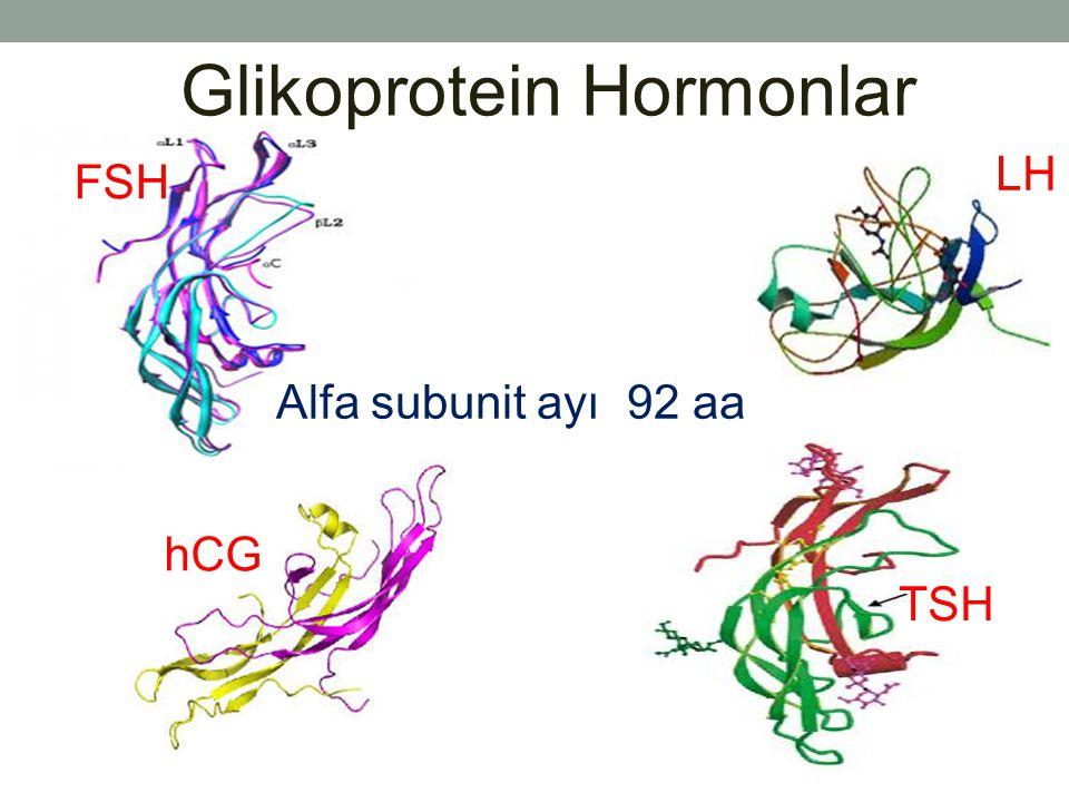 Glikoprotein Hormonlar