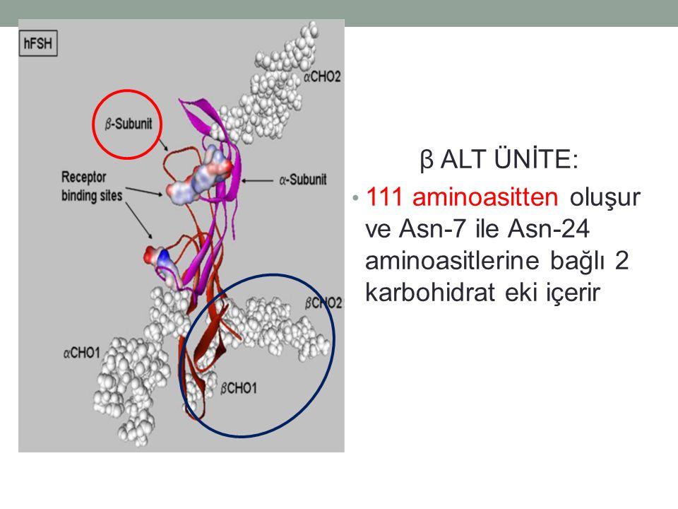 β ALT ÜNİTE: 111 aminoasitten oluşur ve Asn-7 ile Asn-24 aminoasitlerine bağlı 2 karbohidrat eki içerir.
