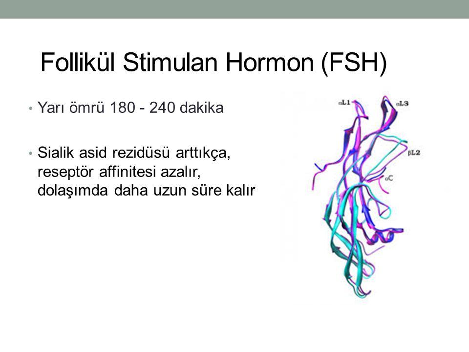 Follikül Stimulan Hormon (FSH)