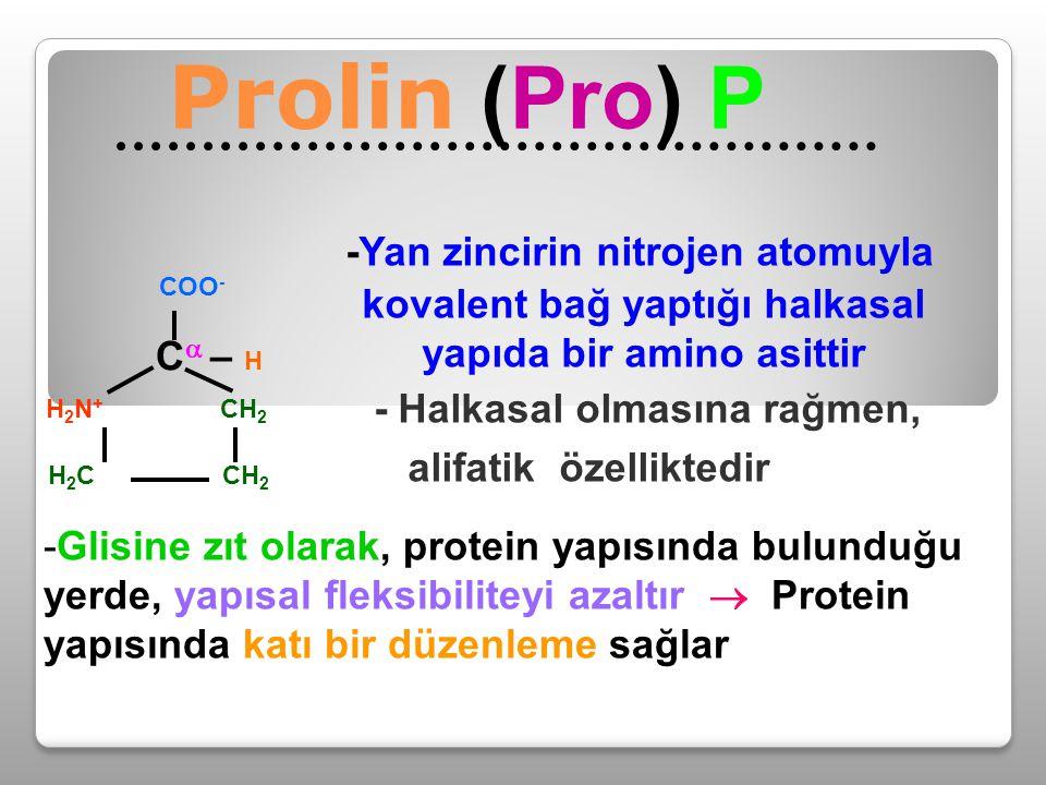 Prolin (Pro) P C – H -Yan zincirin nitrojen atomuyla