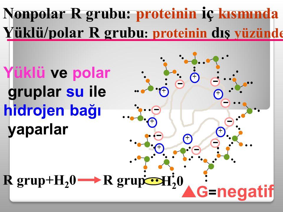 Nonpolar R grubu: proteinin iç kısmında