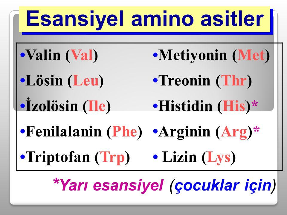 Esansiyel amino asitler