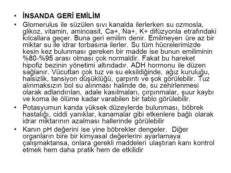 İNSANDA GERİ EMİLİM