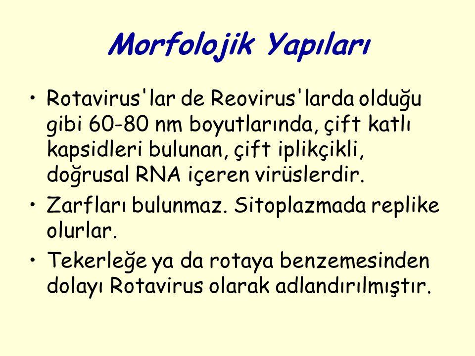 Morfolojik Yapıları